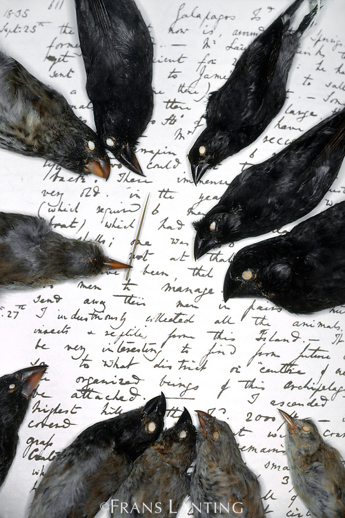 darwins finch evolution lab The evolution of darwin's finches overview the lesson natural selection and the evolution of darwin's finches is aligned with the ngss science practices of (1) engaging in argument from evidence using mathematical and computational thinking and (2) analyzing.