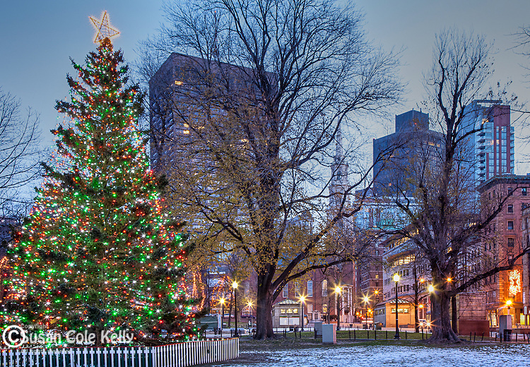 Boston's Christmas tree in Boston Common, Boston, MA