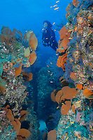 QT0144-D. scuba diver (model released) looking through reef split decorated with sea fans (Pacifigorgia sp.) and gorgonians. Baja, Mexico, Sea of Cortez, Pacific Ocean.<br /> Photo Copyright &copy; Brandon Cole. All rights reserved worldwide.  www.brandoncole.com