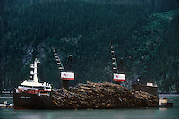 731000333 a working logging ship the haida brave loads floating logs or timber on board with help from small tug boats for transport to international destinations stewart bay british columbia canada - image is not property or model released
