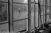 A.S.Neill and his dog going over to his house, seen through the carpentry workshop window, Summerhill school, Leiston, Suffolk, UK. 1968.