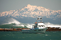 A fishing boat sits moored at Island Bay in Wellington with the Kaikoura Mountain Range on New Zealand's South Island as its backdrop.
