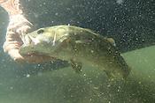 Fishing the Elk River 9/27/16