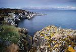 Breithavik coastline, Iceland