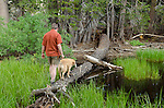 Hiker and dog (golden retriever) crossing a pond on a log, Sierra Nevada, Toiyabe National Forest, California