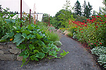 A squash plant escapes the vegetable garden and spills onto the path that runs above the hillside garden with drought tolerant plantings.