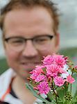 Foto: VidiPhoto<br /> <br /> POEDEROIJEN - Een klein fragiel aandachtstrekkertje en daardoor beeldbepalend, vindt Teunis Versteeg van De Liesvelden Kwekerij uit Poederoijen. Het vetplantje uit het verleden heeft z'n voorjaarsimago inmiddels van zich afgeschud en via het nieuwe type Elise er de uitstraling van volwassen zomerplant bijgekregen. Met als bijkomend voordeel dat oude, verdorde bloemen vanzelf vervangen worden door nieuwe knoppen. Veel langer dan &eacute;&eacute;n seizoen redt het kamer-tuinplantje het echter niet. Om de winter te overleven moeten de bewaardcondities optimaal zijn. En dat is net wat teveel moeite voor een potplantje van rond de 2,50 euro consumentenprijs. Versteeg produceert 80.000 Lewisia's op 2,2 ha. glas. Het is dan ook niet de hoofdteelt, maar inmiddels wel een bijzonder bijproduct sinds Teunis en zijn vrouw het bedrijf in de Bommelerwaard in 2014 van hun ouders hebben overgenomen. Zo'n 70 procent van de productie vindt z'n weg via de bemiddeling op de veiling. De rest gaat rechtstreeks naar afnemers als tuincentra en bouwmarkten.