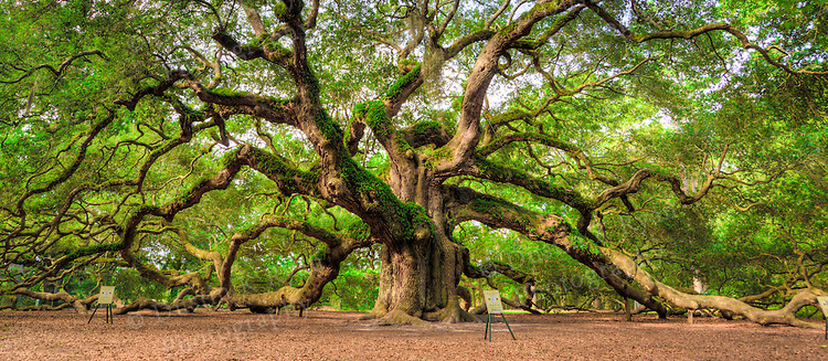 Angel Oak Tree Johns Island SC | Dustin K Ryan Photography: dustinkryan.photoshelter.com/image/I0000zUGEalNubBc