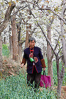 Une vieille femme dans son verger. C'est au bout d'une canne en bois que l'on installe un pompon de plumes ou de duvet pour déposer sur les fleurs le pollen fécondant. ///An old woman in her orchard. The farmers put the fertilizing pollen on the flowers with a wooden cane to which a pompom of feathers or down has been attached at one end.