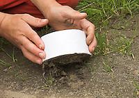 Kinder gießen Tierspur aus Gips, Junge hebt mit Gips gefüllten Ring aus Karton über dem Trittsiegel, der Fußspur von einem Reh vorsichtig vom Boden ab