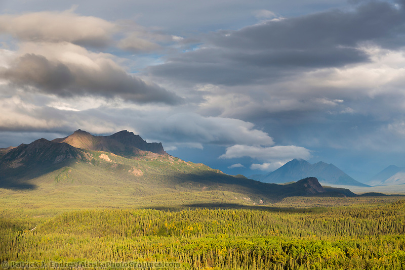 Sun accents the forested landscape in the foothills of the Alaska range, Denali National Park, Alaska.