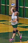 1 November 2015: SUNY College at Old Westbury Panther Outside Hitter Olivia O'Keefe, a Sophomore from Lindenhurst, NY, in action against the Yeshiva University Maccabees at SUNY Old Westbury in Old Westbury, NY. The Panthers edged out the Maccabees 3-2 in NCAA women's volleyball, Skyline Conference play. Mandatory Credit: Ed Wolfstein Photo *** RAW (NEF) Image File Available ***