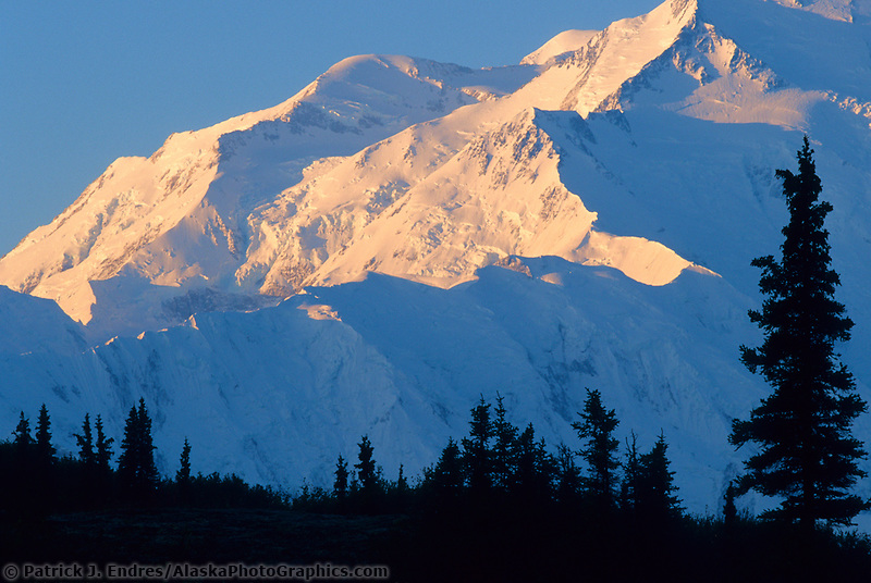 Spruce Tree Silhouetted Agains The Sunrise On Pioneer Ridge Of Mt. Denali, Denali National Park
