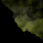Silhouette of a bird on a cliff