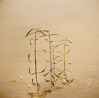 Weeds In a lake