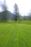 Abstract Blurred meadow, Austrian Alps.