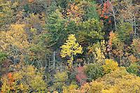 Fall colors illuminate the landscape in Greene County, VA. Photo/Andrew Shurtleff