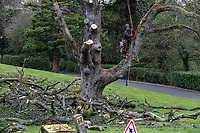 Tree surgeon in the process of completely demolishing a dead tree In the grounds of Stranmillis College, Belfast, N Ireland, April, 2017, 201704113385<br />