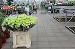 Foto: VidiPhoto<br /> <br /> VALBURG - De laatste troschrysanten bij Bloemisterij Willemsen in Valburg.