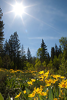 """Sunshine on Mule Ears"" - These Mules Ears were photographed near Lake Tahoe, CA."