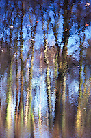 Abstract autumn reflection of beech trees in a lake located in Krefled, Germany.