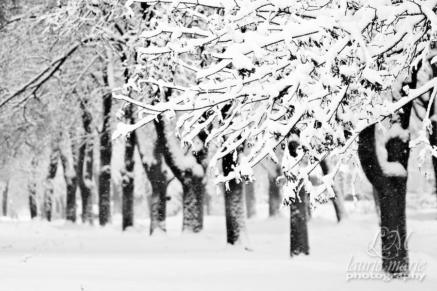 snowy trees black and white laurie hunsaker