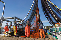 Commercial fishermen for the Herring sac roe fishery check net for needed repairs on dock in Sitka, Alaska.