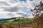 Vineyard in Dundee Hills AVA, a Willamette Valley, Oregon wine region.  Great views of the valley and rolling hills make this a terrifically scenic wine region.