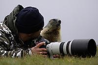 Photographer with Alpine Marmot (Marmota marmota) (model release 03/08/HTNP), Hohe Tauern National Park, Carinthia, Austria