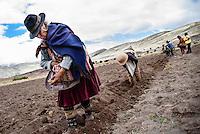 The Cruz family plants potatoes, inside Maragua Crater, in the Cordillera de los Frailes.