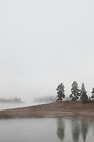 """Foggy Morning at Prosser Reservoir"" - This foggy scene was photographed at Prosser Reservoir, near Truckee, CA."