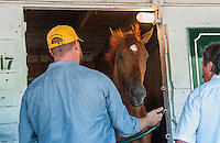 Kentucky Derby winner I'll Have Another gets his photo taken by fans and media the morning after his win in the Kentucky Derby at Churchill Downs in Louisville, Kentucky on May 6, 2012.