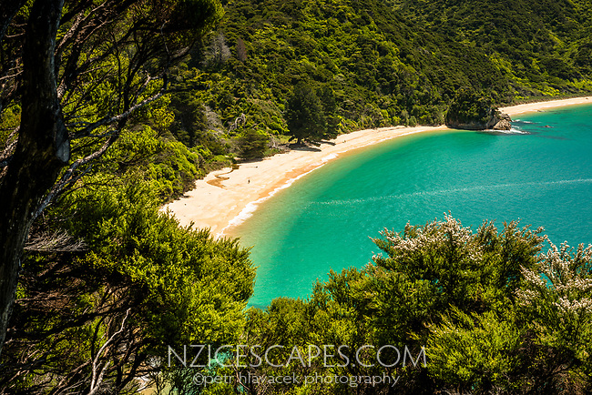 Anatakapau Bay with Mutton Cove as seen through native kanuka bush on Abel Tasman Coast Track, Abel Tasman National Park, Nelson Region, South Island, New Zealand, NZ