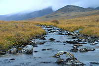 A caribou antler rests in the creek, dropped probably several years before. North Slope, Endicott Mountains of the central Brooks Range in northern Alaska. 130 miles north of the the Arctic Circle.