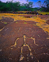 Petroglyph Filled With Grass, Puako Petroglyphs, Big Island of Hawaii, Hawaii