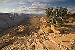 The Waterpocket Fold from Halls Overlook in Capital Reef National Park, Utah