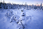 Snow in a spruce bog in Acadia National Park, Maine, USA