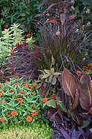 Colorful summer garden with plant tapestry of Zinnia 'Profusion Orange', Canna 'Tropicana', purple Pennisetum foliage, and 'Sweet Caroline Bronze' Ipomoea batatas in Nancy Ondra Pennsylvania garden