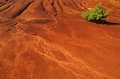Erosion pattern in red soil, Pigeon Forge, Tennessee, USA.