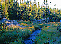 Mountain stream and evergreen trees just below Dream Lake, Rocky Mountain National Park, Colorado.