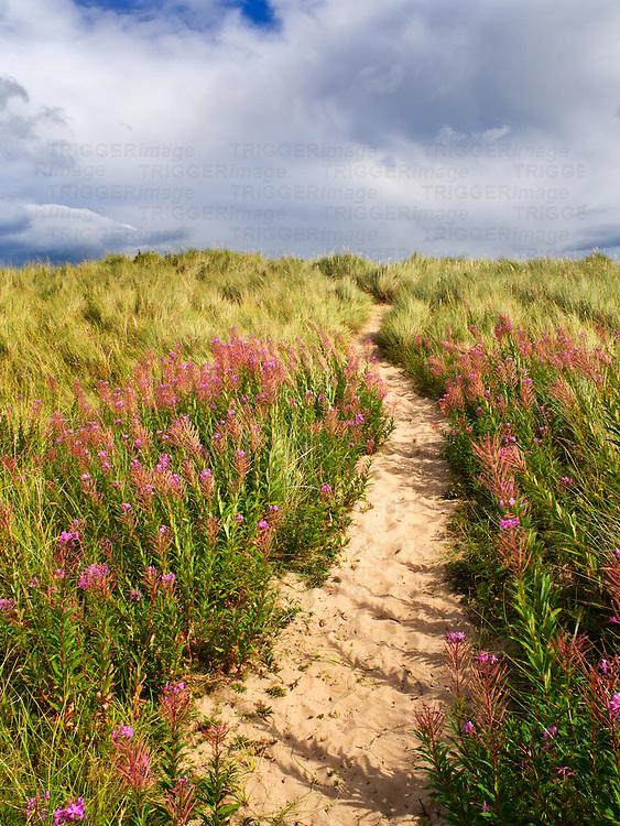 Sandy Path through the Dunes at Druridge Bay near Amble by the Sea on the Northumberland Coast England