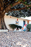 Wooden elves decorate a Sun City home, seen December 9, 2010. .2010 marks the 50th anniversary of Sun City, America's first retirement city that remains the largest today with more than 40,000 residents 55 and older.