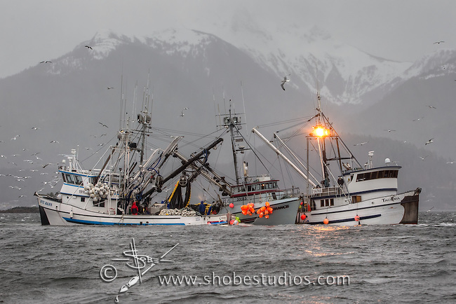 Fishing boats in 2010 Sitka Herring Fishery in Sitka, Alaska.