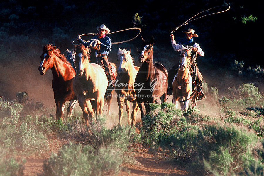 Two cowboys on horseback chasing a group of horses.