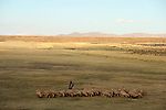 South America, Peru, the Andes. Shepherds and sheep in the Andean landscpae.