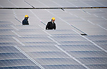 Staff lay electrical cables at the Minamisoma Agri-Solar Park in Minamisoma, Fukushima, Japan on 10 Feb 2013. More than 2,000 solar panels will power the domes, inside which farmers affected by the 2011 tsunami and nuclear accident will be able to grow produce. Excess power will be sold to a local utilities company. .Photographer: Robert Gilhooly