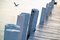 USA, Newport, RI - Gull flies past pilings of Bannister's wharf.
