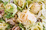 Closeup of Castelfranco lettuce