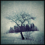 a lone tree in winter with snow