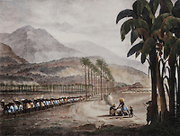 Slaves working in the fields near Havana, Cuba, early 19th century, by Ambroise Louis Garneray, 1783-1857, in the Musee d'Aquitaine, Cours Pasteur, Bordeaux, Aquitaine, France. Picture by Manuel Cohen